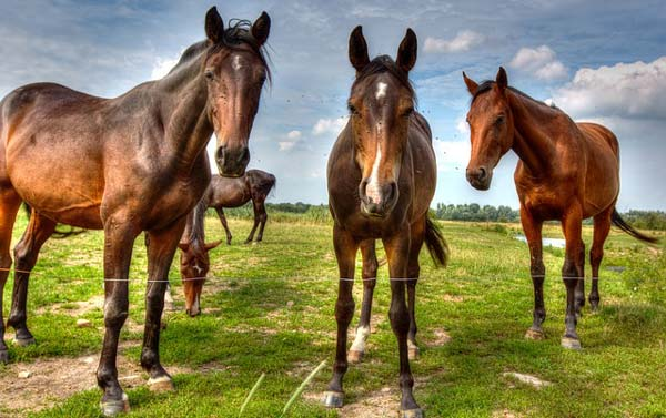 10 Louisville Stereotypes: Horses