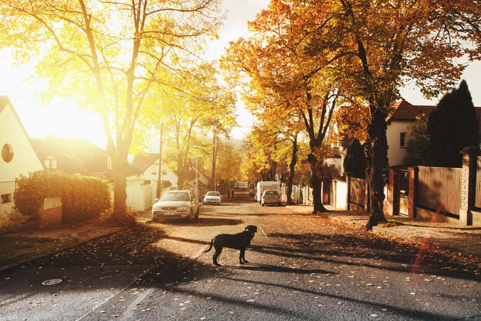 Photo of a dog on a suburban street