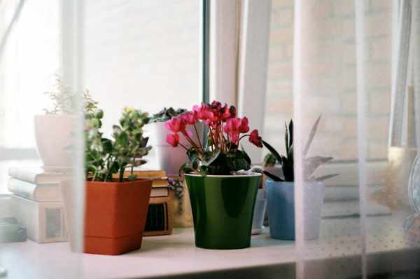 Photo of some plants staged by a window