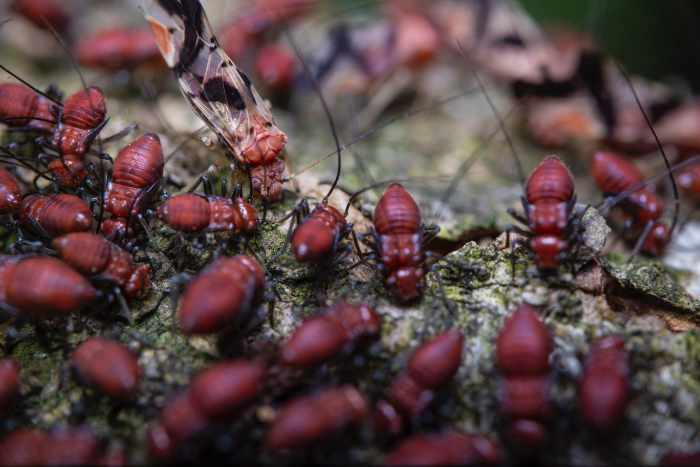 Photo of termites