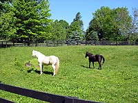 Photo of Beautiful horses in Anchorage Louisville