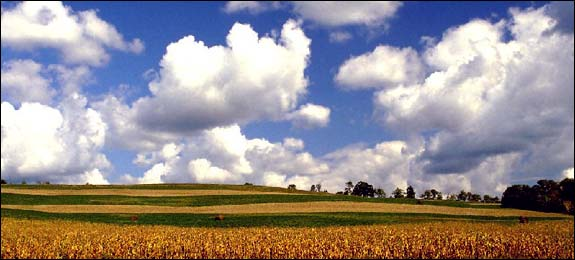 Photo of Iowa cornfields.
